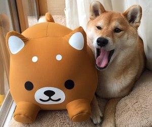 dog and animals image