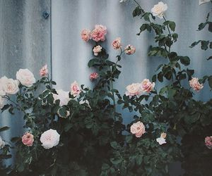 flores, flowers, and rosas image