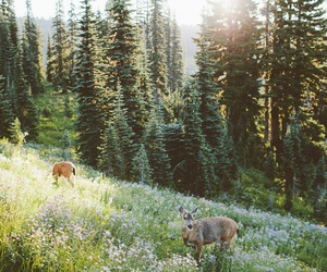 nature, forest, and animals image