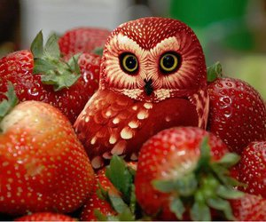 owl, strawberry, and red image