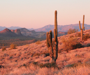 desert, cactus, and mountains image