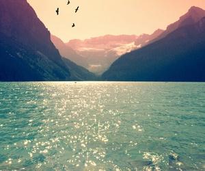 bird, beautiful, and mountains image