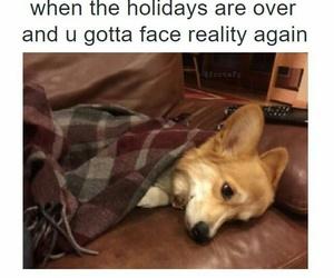 funny, holiday, and dog image
