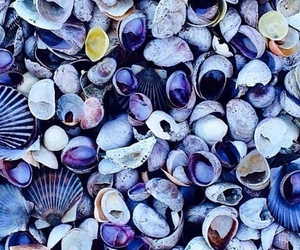 blue, shell, and purple image
