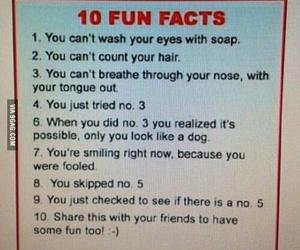 fact, fool, and fun image