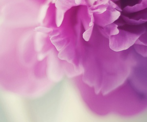 flowers, purple, and wallpapers image