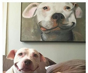 dog, funny, and selfie image