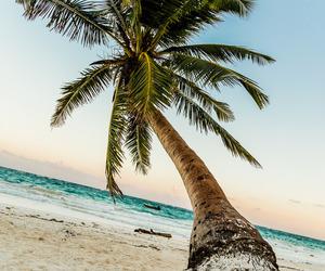 beach, sea, and holidays image