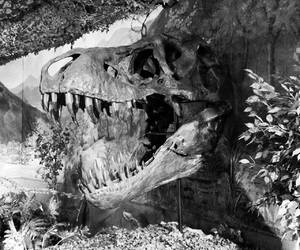 dinosaur, florida, and fossil image