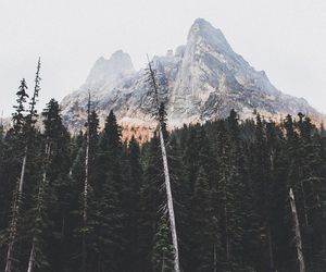 mountains, travel, and forest image