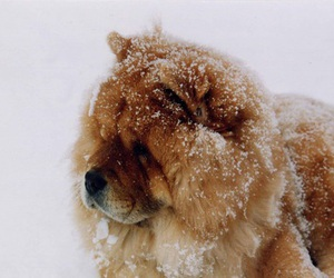 dog, animal, and winter image