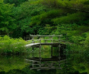 bridges, water, and trees image