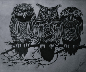 hipster, owl, and ▲ image