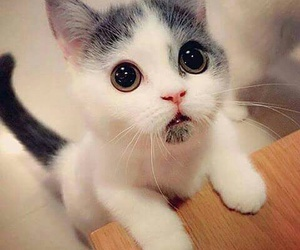 cat, cutee, and this image
