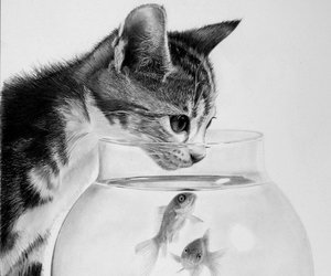cat, fish, and drawing image