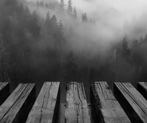black and white, dark, and nature image