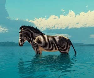 zebra, animal, and sea image