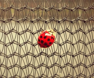 ladybug, net, and vintage image