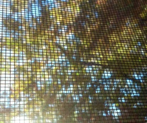 autumn, fall, and net image