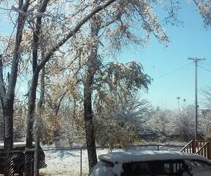 snow, tree, and sun image
