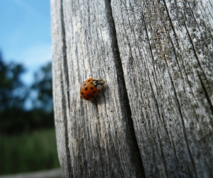 animal, germany, and ladybird image