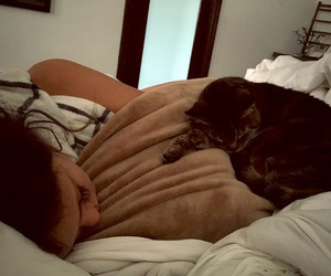 beautiful, cat, and bed image