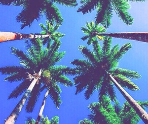 blue, palmtrees, and green image