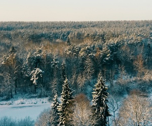 forest, Lithuania, and winter image