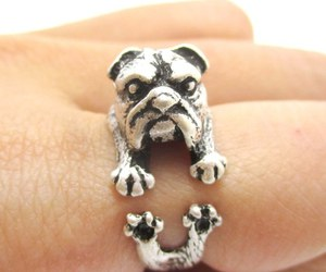 animals, jewelry, and rings image