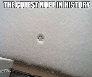 funny, lol, and paws image