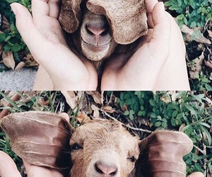 animal, funny, and cute image