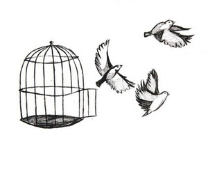 bird, free, and freedom image