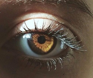 eyes, eye, and brown image