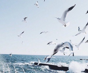 bird, sea, and fly image