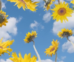 clouds, music, and sunflowers image
