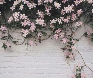 flowers, pink, and wall image