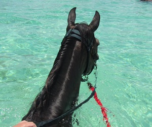 horse, water, and summer image