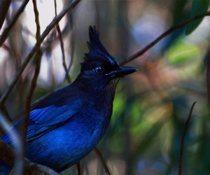 blue, photography, and nature image