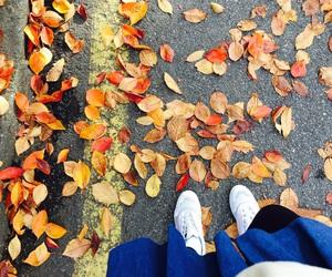 fall, fallenleaves, and korea image