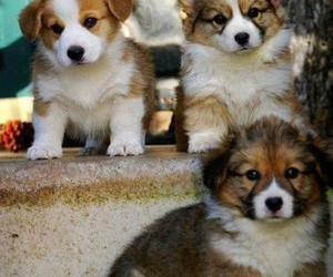 cute, puppies, and dogs image
