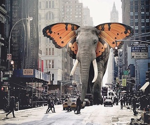 elephant, butterfly, and city image