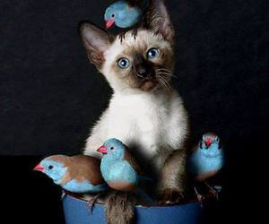 cat, bird, and kitten image