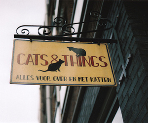 sign and cats and things image