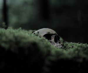 skull, green, and harry potter image