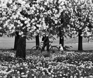 flowers, trees, and vintage image