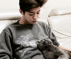 luhan, exo, and cat image