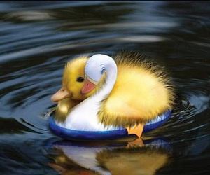 duck, water, and duckling image