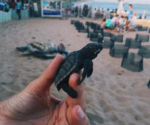 turtle, beach, and baby image