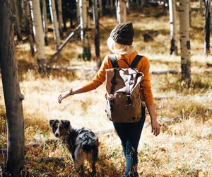 dog, forest, and girl image