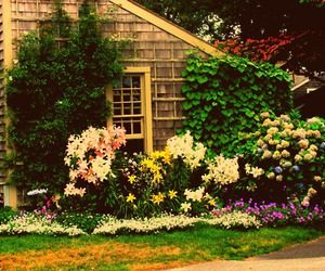 cottage, flowers, and Nantucket image